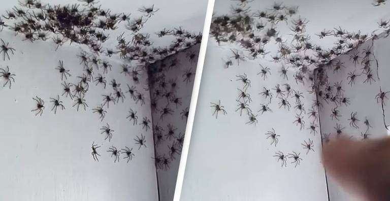Mum Horrified By Dozens Of Spiders Infesting Her Daughter's Bedroom