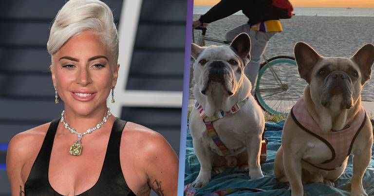 Lady Gaga's Dogs Were Found Tied To Pole Miles From Where They Were Taken