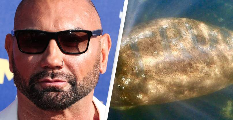 Dave Bautista Offers $20,000 Reward To Catch Whoever Etched 'Trump' On Manatee's Back