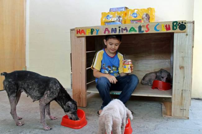 Little Lad Rescues Dogs, Internet Responds In Amazing Way ad 136881457