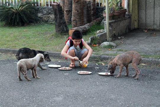 Little Lad Rescues Dogs, Internet Responds In Amazing Way d25