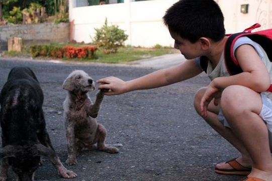 Little Lad Rescues Dogs, Internet Responds In Amazing Way h7