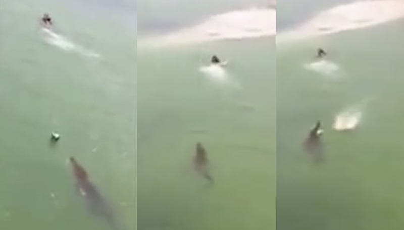 Tourist Goes For A Swim, He Soon Finds Out Why No One Else Swims There croc