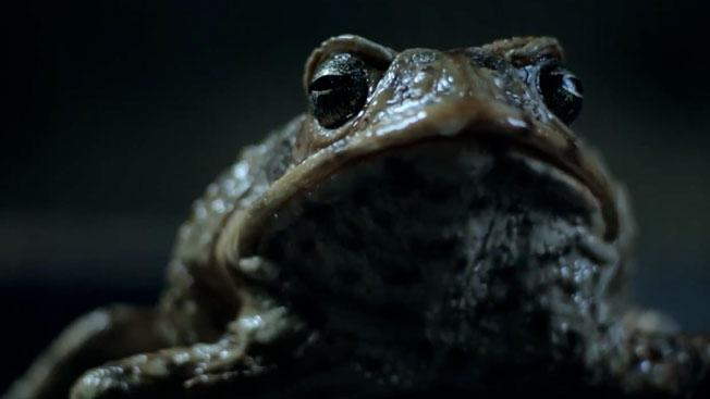 This Australian Ford Advert Is Completely Messed Up ford toad