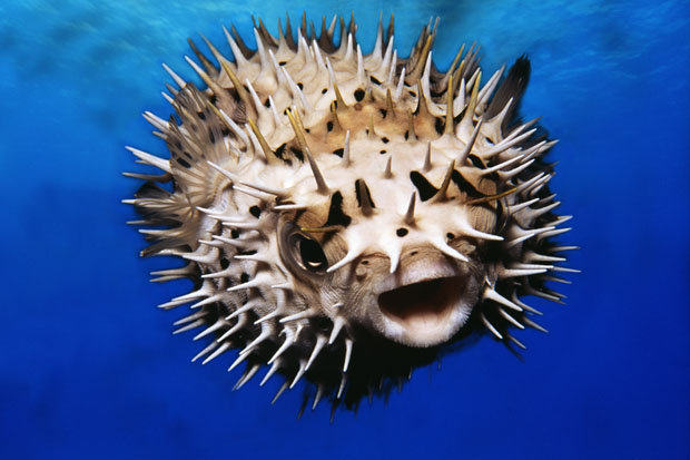 Eleven Family Members Paralysed, Fighting For Life After Eating Pufferfish 544a6cbab80fc 200404336001