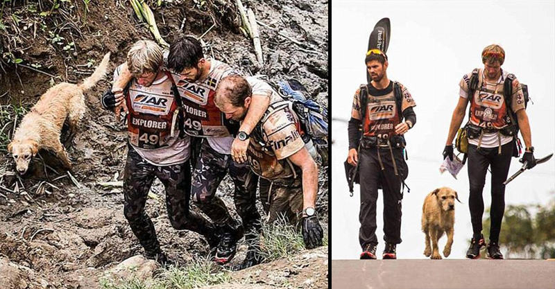 Stray Dog Completes 400 Mile Race With Extreme Sports Team, Finds New Home 1151