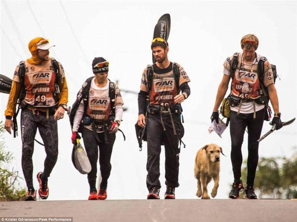 Stray Dog Completes 400 Mile Race With Extreme Sports Team, Finds New Home 236A165700000578 0 image 6 1416751524088