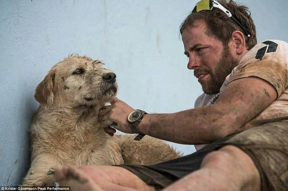 Stray Dog Completes 400 Mile Race With Extreme Sports Team, Finds New Home 236A166300000578 0 image 4 1416751517941