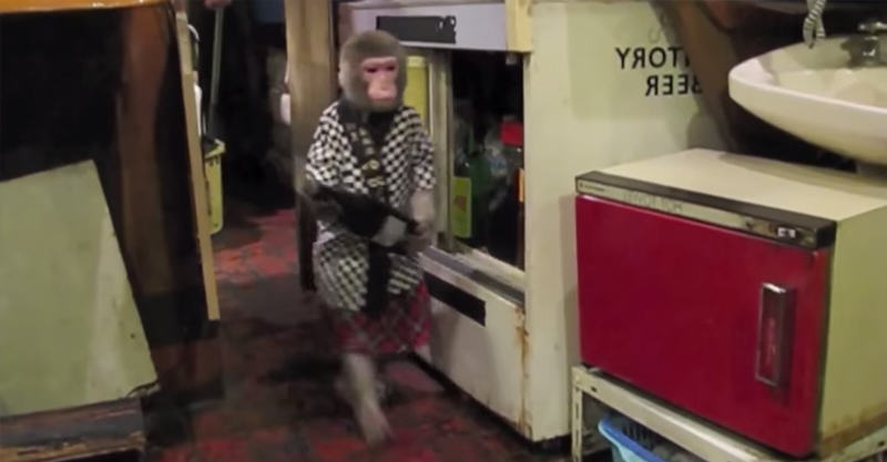 This Tavern In Tokyo Has An Actual Monkey Waiter 220