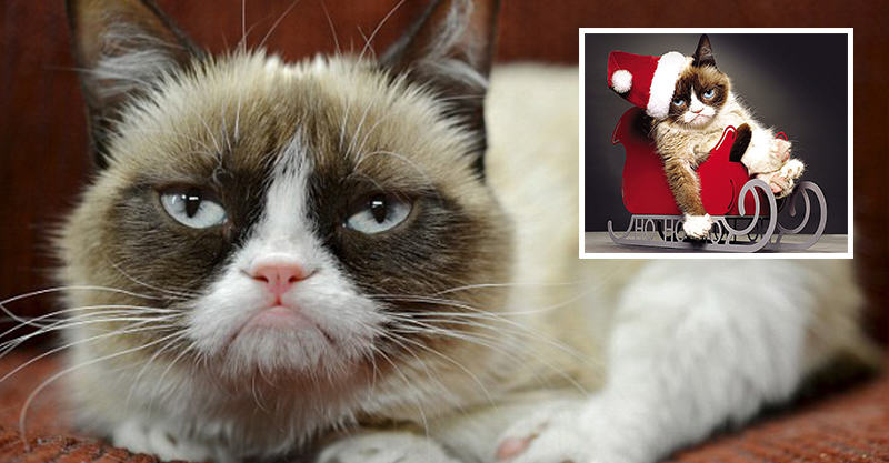 Internet Sensation Grumpy Cat Has Made Its Owner Over £60 Million 231