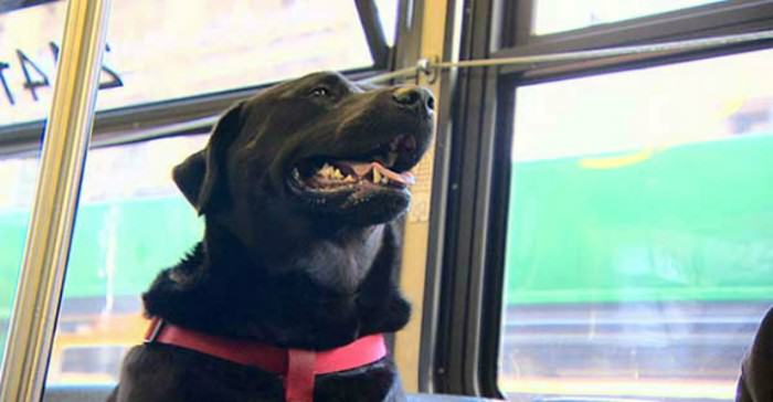 This Friendly Dog Takes The Bus To The Park By Herself 011315 komo bus riding dog new img e1421252167284