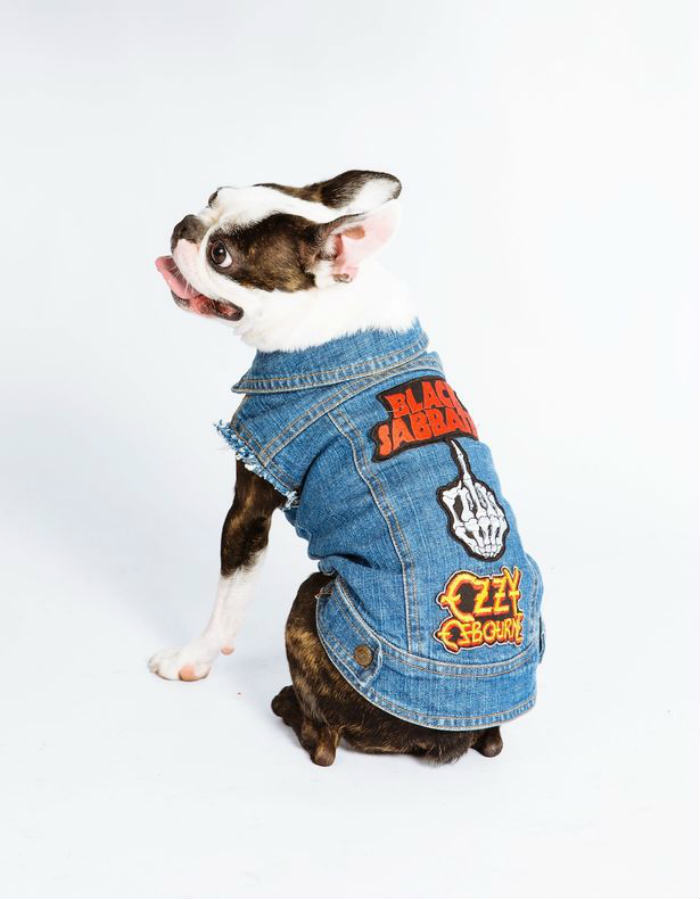 Is Your Dog A Rocker, But Missing A Sleeveless Denim Jacket? Youre In Luck PAY Denim Dogs 1