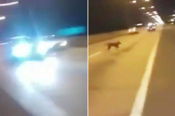 Internet Goes Crazy Over Dog That Suddenly Appears Out Of Nowhere TEASER Teleporting dog