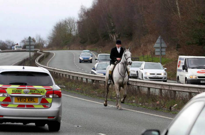 Hunting Dogs Run On To Duel Carriageway And Cause Mayhem ad 156196790