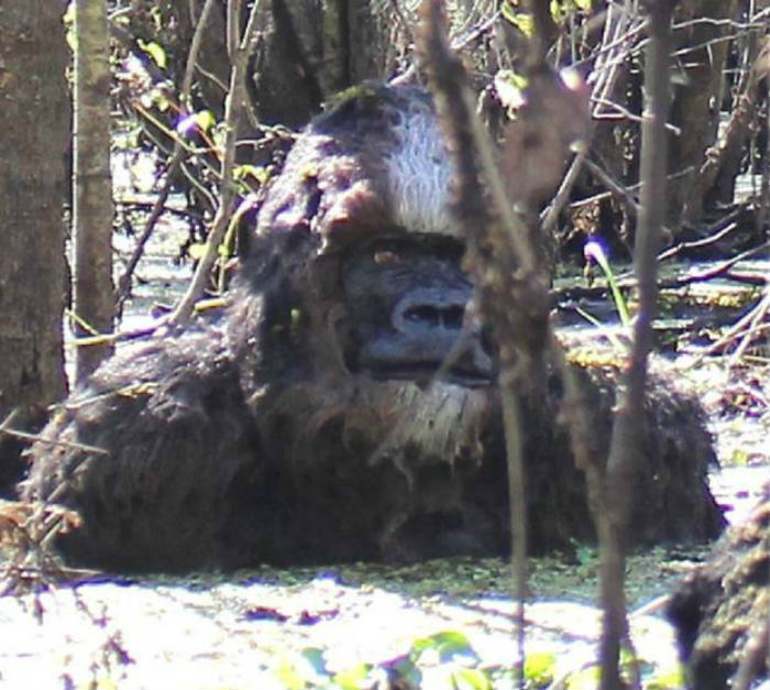 This New Bigfoot Sighting Could Be The Funniest One Yet bf1