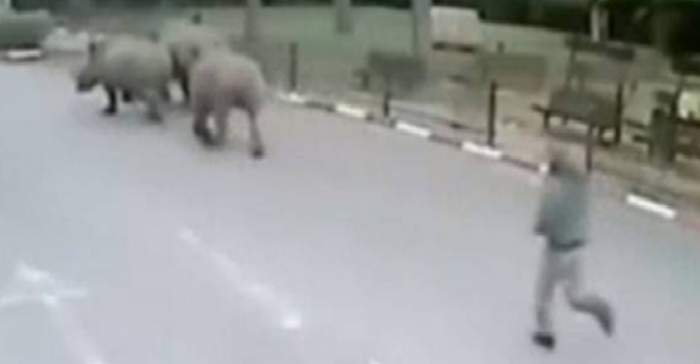 Watch This Security Guard Chase After Three Rhinos That Did A Runner While He Was Sleeping rhino e1421600293560