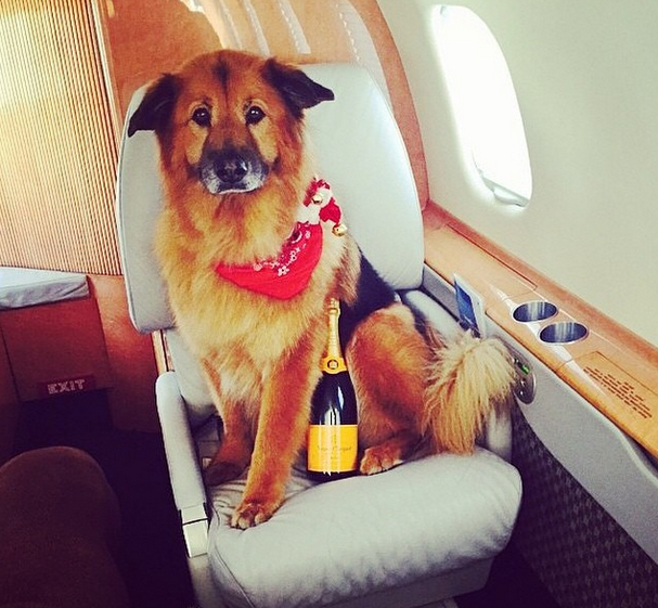 These Rich Dogs Of Instagram Are Living A More Glamorous Life Than You Are 1111