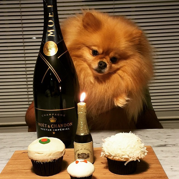 These Rich Dogs Of Instagram Are Living A More Glamorous Life Than You Are 65