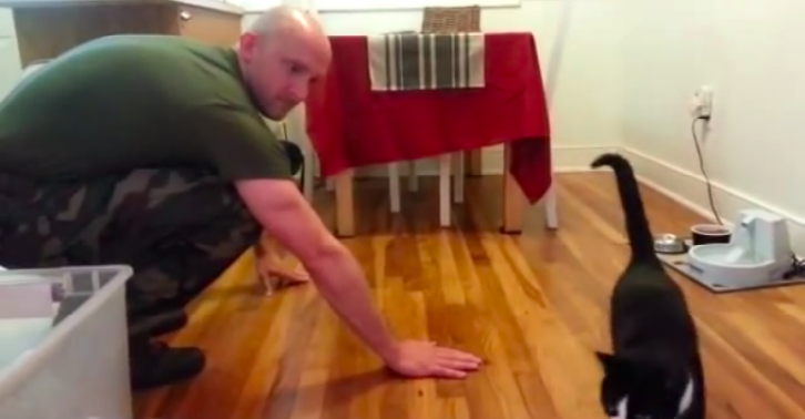 Video Of Cats Welcoming Home Soldier Owners Proves Cats Are Sh*t cats welcoming home soldiers