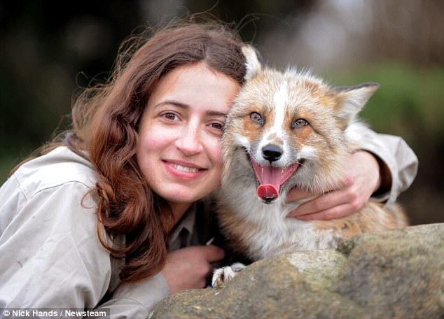 Meet Todd, The Adopted Fox That Is Just Like A Regular Dog 164