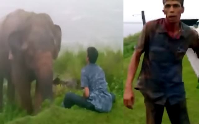 This Drunk Man Being Attacked By An Elephant Makes Me Realise Braincells Are Important ElephantWebsite 640x400