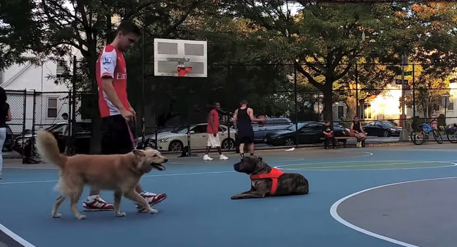 Man Demonstrates His Pitbulls Incredible Obedience, Proves Training Is Everything Screen Shot 2015 03 25 at 13.48.57