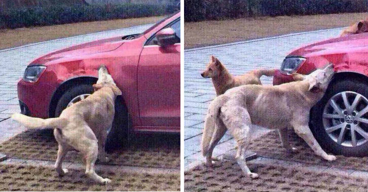 Dog Kicked By Guy Comes Back With Mates And Destroys His Car dog tn