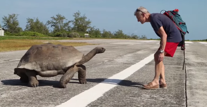 Guy Interrupts Giant Tortoises Banging, Then Gets Hilariously Chased ewfds