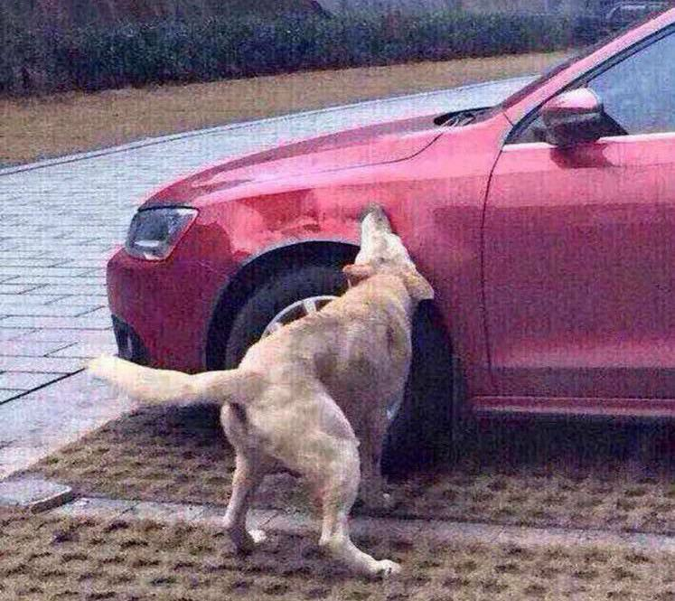 Dog Kicked By Guy Comes Back With Mates And Destroys His Car ijuyhgvbh