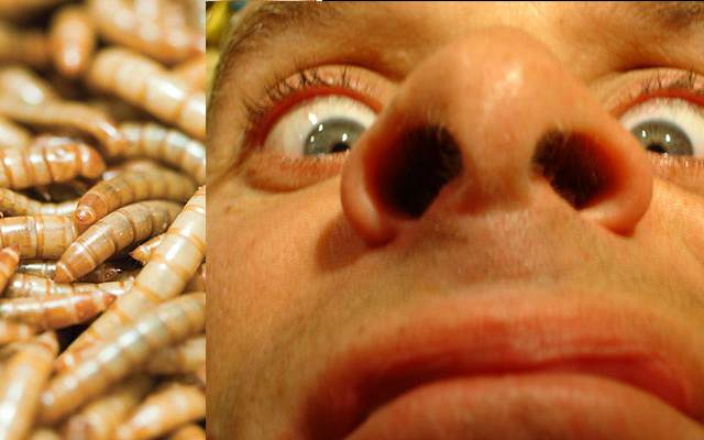 Over 100 Maggots Removed From 65 Year Old Mans Nose maggotWebsiteThumb 1 Recovered 640x400