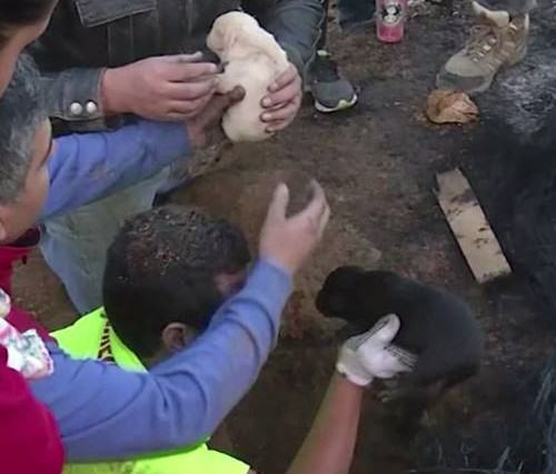 Heroic Momma Dog Saves Her Entire Litter Of NINE Puppies From Forest Fire momma 2 500x426