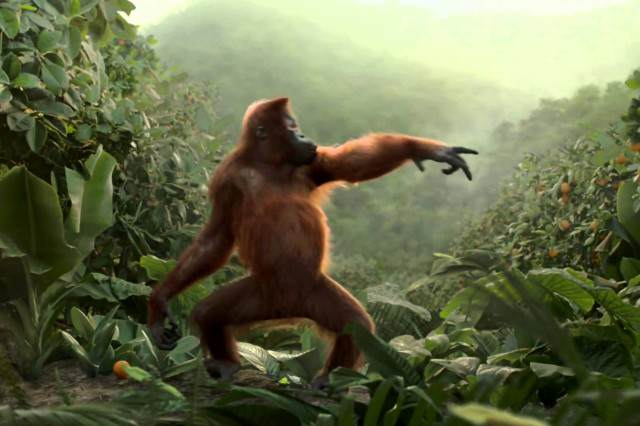 Dancing Monkey Has Better Moves Than You, Guaranteed To Brighten Your Day monkey111 640x426