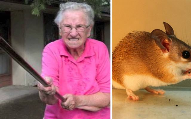 Grandma Kills Mouse With A Brush For Eating Her Mustard mouse Website Thumb 640x400