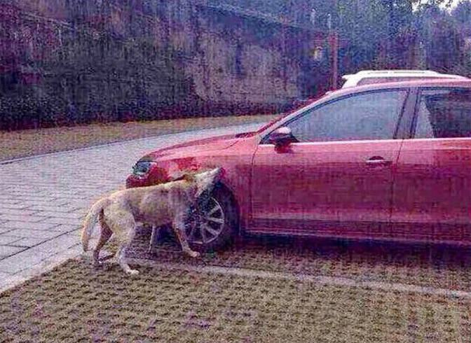 Dog Kicked By Guy Comes Back With Mates And Destroys His Car okijok