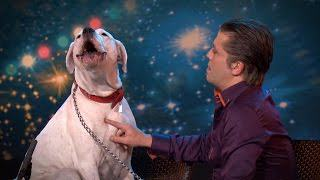 Dog Sings Whitney Houston On TV Show, Is Better Than Most Humans whitney