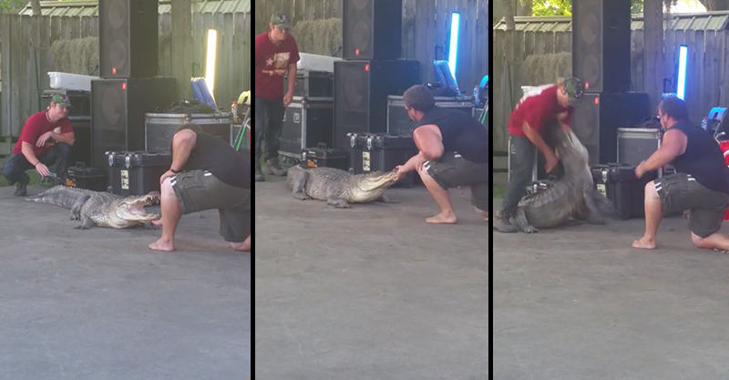 Idiots Try To Tame Alligator For A Party Trick, Meet Karma 1103