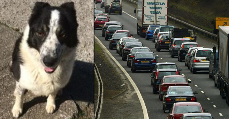 Delays On Motorway After Dog Was Spotted Driving Tractor 181
