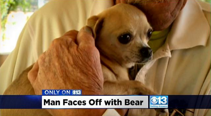 73 Year Old Man Punches Bear In The Face To Save His Dog Screen Shot 2015 04 30 at 13.59.02