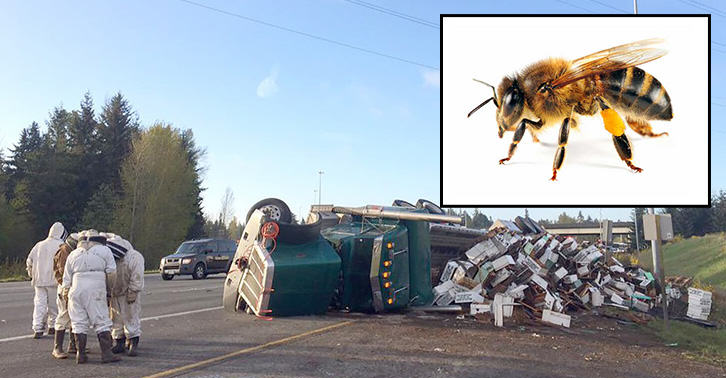 A Lorry Tips Over, Releasing Millions Of Bees Onto The Highway beetn