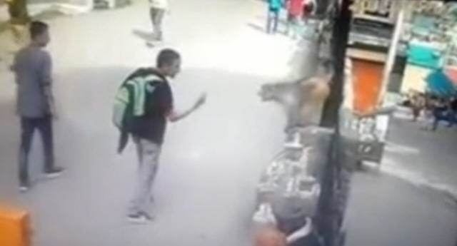 Guy Gives Monkey The Finger, Monkey Takes Him Out In Response drop kick