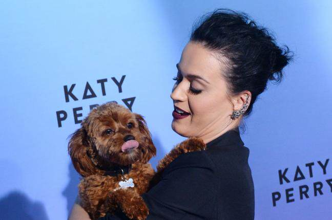 Katy Perry Accidentally Gives Her Phone Number To The World katy1