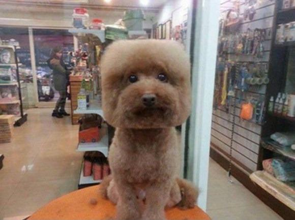 Square Faced Dogs Are Now a Thing In Taiwan square