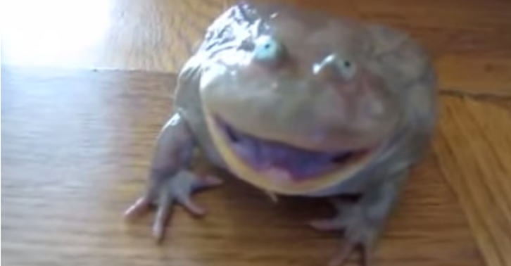 Frog Has The Strangest Response To Being Touched Ever thubnizznay