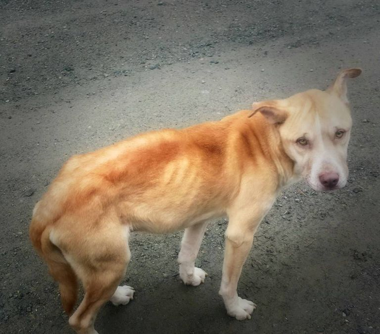 Woman Saves Stray Dog By Playing Dead To Gain Its Trust trust1