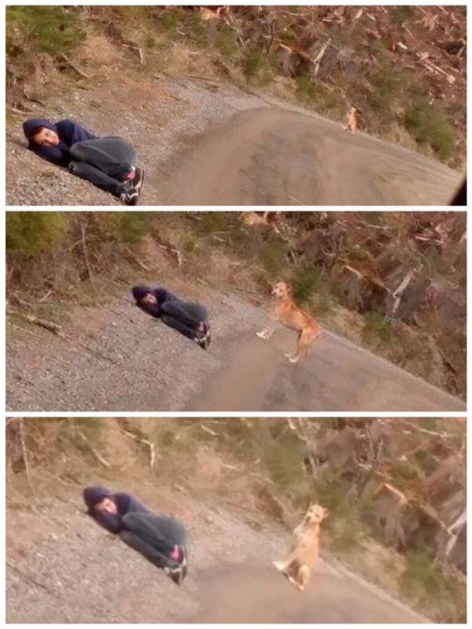 Woman Saves Stray Dog By Playing Dead To Gain Its Trust trust3