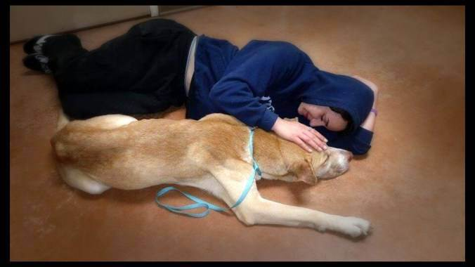 Woman Saves Stray Dog By Playing Dead To Gain Its Trust trust4