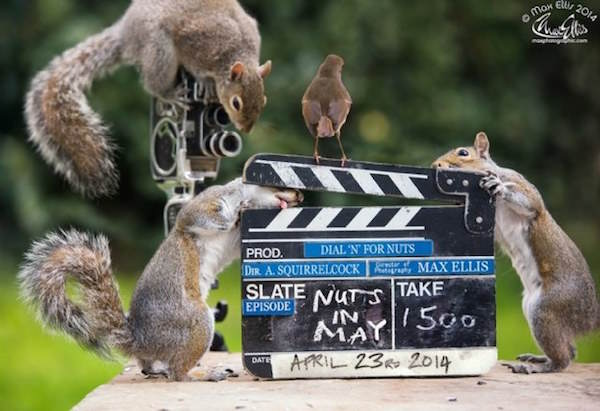 This Guy Found A Way To Photograph Squirrels Lifting Weights 10