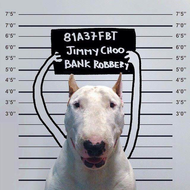This Artist Uses His Bull Terrier To Create These Amazing Illustrations 101