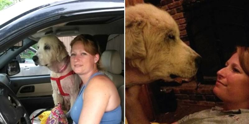 Dog Gets Second Chance At Life After Owner Is Killed In Tornado 1117