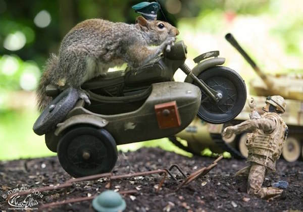 This Guy Found A Way To Photograph Squirrels Lifting Weights 115